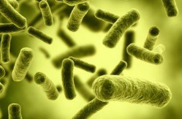Antibióticos – Tudo Sobre: Lista de nomes, Para que Servem, Efeitos Colaterais