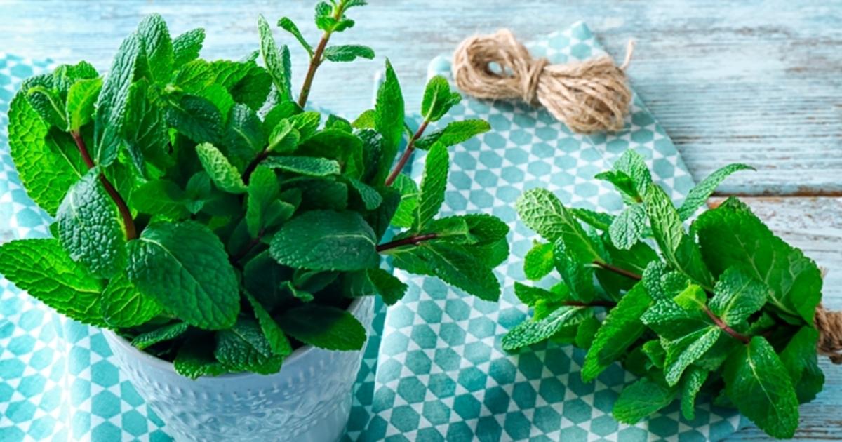5 Benefícios da erva cidreira para sua saúde